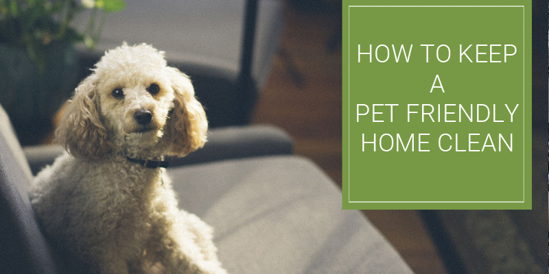 How to keep a pet friendly home clean?