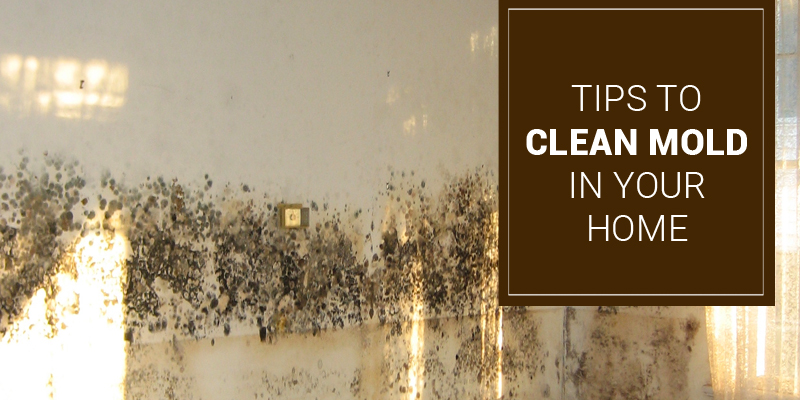 All About Mold – What is Mold, How to Detect Mold and Tips to Clean Mold in Your Home